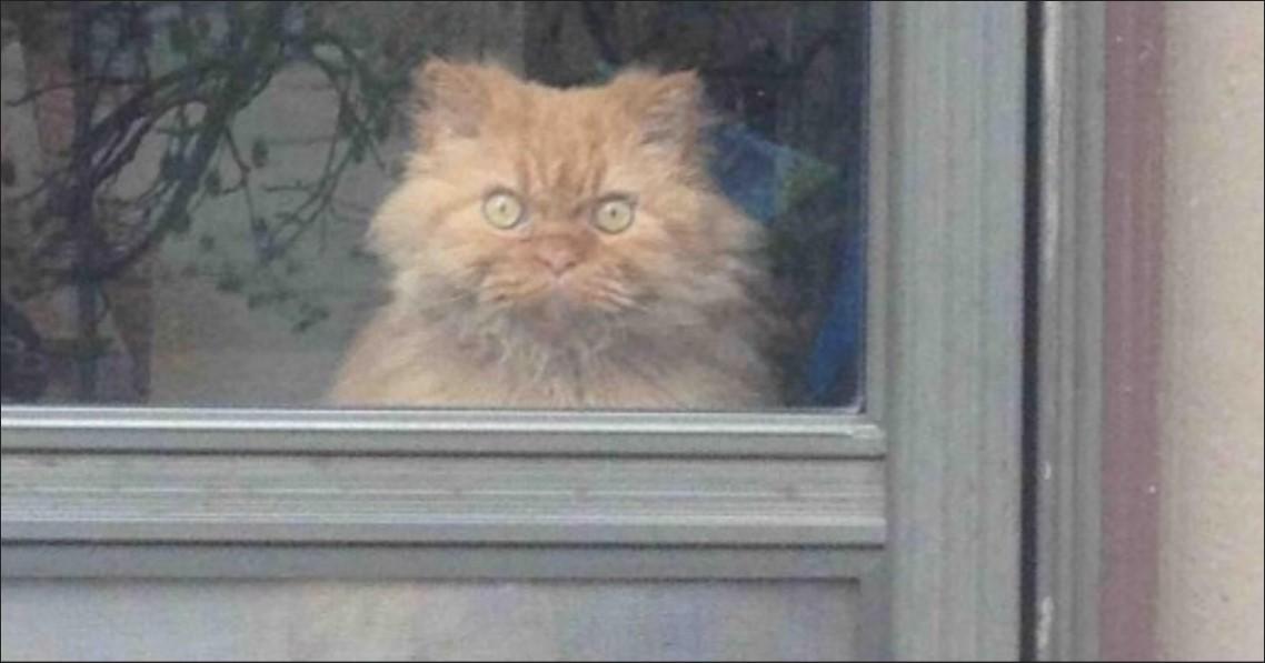 14 schräge Schnappschüsse von Katzen.